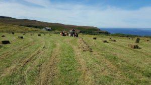 hay making 1